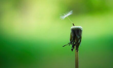 La vie consciente : 3 mentalités clés